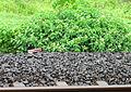 Western Railway - Views from an Indian Western Railway journey on a Monsoon Season (29).JPG