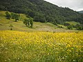 Wildflowers-Ravne - panoramio.jpg