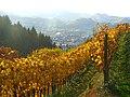 Wino - panoramio (1).jpg