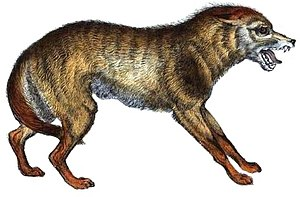 Origin of the domestic dog - 50 px