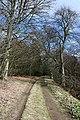 Woodland Track - geograph.org.uk - 763511.jpg
