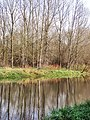 Woodland by the Cherwell - geograph.org.uk - 610974.jpg