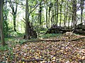 Woodland near Philipps House - geograph.org.uk - 1551731.jpg