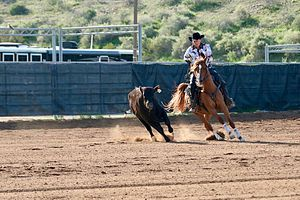 Working cow horse - A younger horse competing in a snaffle bit