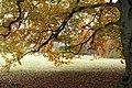 Wrocław-jesień w parku Szczytnickim - panoramio.jpg
