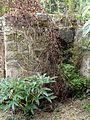 Wy-dit-Joli-Village (95), musée de l'Outil, jardin, ancienne fontaine ou entrée d'une cave.JPG