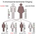 X-chromosomal-dominant-Vater.png