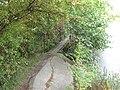 Xaverovský rybník I, lávka nad přepadem.jpg