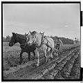Yrkestevlinger, jordbruk - Fo30141603030051 1.jpg