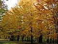Zagrebellia-dendropark-osin-11102109.jpg