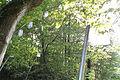 Ziffern im Wald 05.jpg