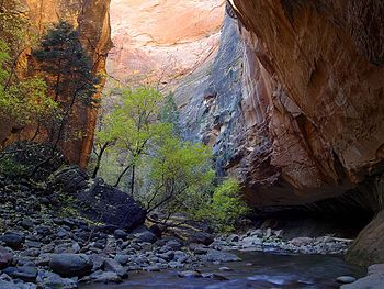 The Virgin River Narrows