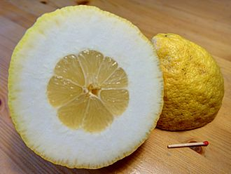 Citron - A citron or citron-like hybrid of Italian origin (note the thick rind).