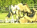 Zoo Freiburg Mundenhof - Magic Rhine Valley Photography - panoramio.jpg
