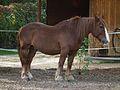 Zoo Worms Pfalz Ardenner Kaltblut 2011.JPG