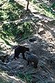 Zoologická zahrada Tábor - Větrovy (42).jpg