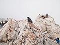 Zugspitze - summit 2.jpg