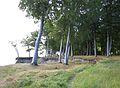 Æbelø skov.jpg