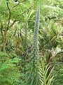 Île de Batz 033 Jardin Georges Delaselle.JPG
