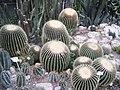 Аллея кактусов.jpg