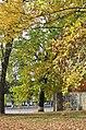 Дуб звичайний у парку Танкістів. Фото 3.jpg