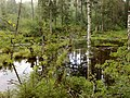 Заросший пруд в лесной глуши - panoramio.jpg