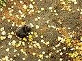 Кицька з острова Хортиця.jpg