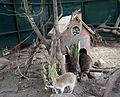 Київський зоопарк Єноти 05.JPG