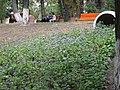 Кувшин с цветами.jpg