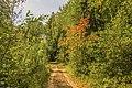 Лесные дорожки MG 9427.jpg