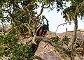 Национальный парк Яла. Павлин. - panoramio.jpg