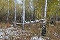 Небольшая городская лесополоса поздней осенью.jpg
