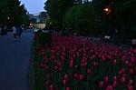 Парк имени Горького в Москве. Фото 68.jpg