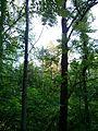 """Парк шума """"Гази Баба"""" 60.jpg"""