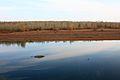 Река Урал осенью - panoramio.jpg