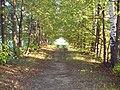 Роща - panoramio (3).jpg