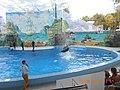 Сочинский дельфинарий парка «Ривьера». 73.jpg