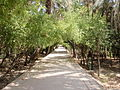 باغ گلشن.JPG