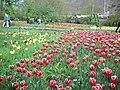 جشنواره لاله های گچسر - panoramio.jpg