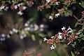 عکس از گلها و گیاهان باغ بوتانیکال تفلیس - گرجستان 21.jpg