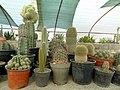 گلخانه کاکتوس دنیای خار در قم. کلکسیون انواع کاکتوس 40.jpg