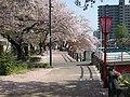 桜が綺麗な袋川土手 - panoramio.jpg