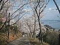 正福寺山公園 三津湾を望む遊歩道 - panoramio.jpg