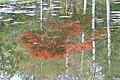 池の中の秋 - panoramio.jpg