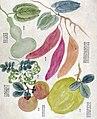 番薯、香員、番柿、葫蘆、灣豆-1.jpg