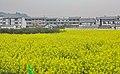 重庆 潼南 白沙村 - panoramio.jpg
