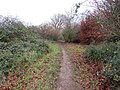 -2018-12-06 Footpath, Pigney Woods, Knapton, Norfolk (4).JPG
