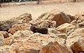 16-0579-100 חוף ראש הנקרה-צ.JPG
