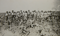 1960 - La prasit porumb - CAP Vintilesti, comuna Bordei Verde.png