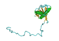 1QKL Essential Subunit Of Human Rna Polymerases I IiAnd Iii 03.png